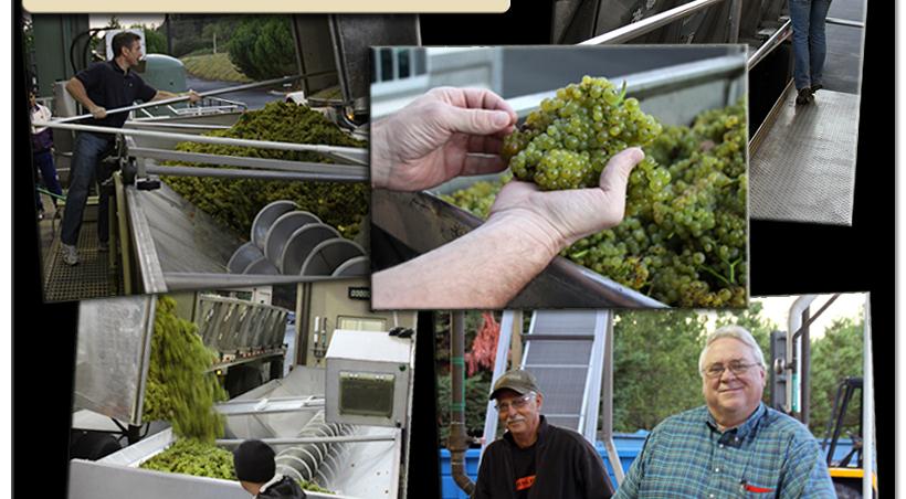 11hvst4 St. Francis Winery & Vineyards