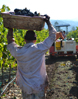 nl harvestgal St. Francis Winery Update