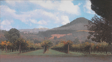 Photo for Sugarloaf Vineyards, 2005 category
