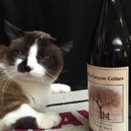 Thumbnail photo for Alta Canyon Cellars  category